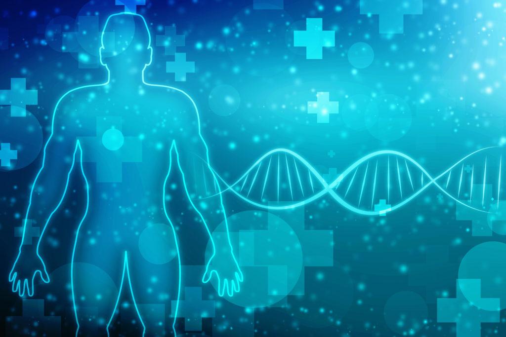筋肉と遺伝子
